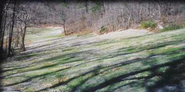Extended Term Erosion Control Blankets